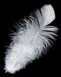 背景黑色羽毛白色 库存图片