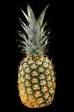 背景黑色菠萝 免版税图库摄影