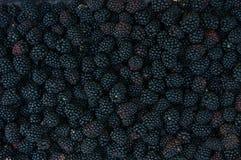 背景黑莓 库存照片