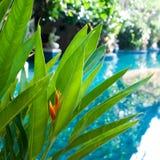 背景,一片热带叶子的纹理 热带,异乎寻常的植物 库存图片