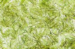 背景,在绿草的风纹理 库存照片