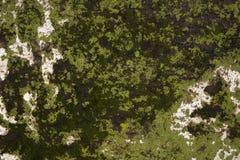 背景,树的青苔吠声纹理  库存图片