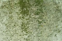 背景,纹理:生苔凝结面 免版税图库摄影