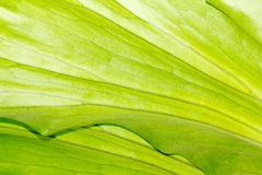 背景,蕨。 免版税库存图片