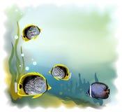 背景水下的世界 库存图片