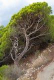 背景贝加尔湖湖杉树 图库摄影