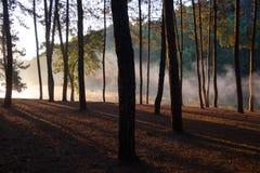 背景贝加尔湖湖杉树 库存照片