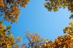 背景满地露水的叶子框架绿色留下白色 库存照片