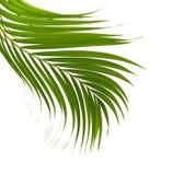 背景离开棕榈树白色 免版税图库摄影