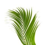 背景离开棕榈树白色 库存照片