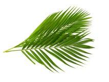 背景离开棕榈树白色 免版税库存照片