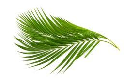 背景离开棕榈树白色 免版税库存图片