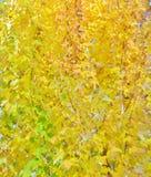 背景-明亮的黄色叶子 库存图片