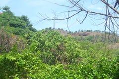 背景019树在森林里 免版税库存图片