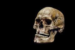 背景黑色人力查出的头骨 库存图片