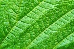 背景绿色叶子本质 库存照片