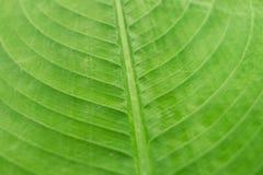背景绿色叶子纹理 图库摄影