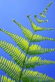 背景绿色叶子自然纹理 库存照片