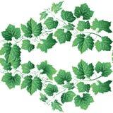 背景绿色叶子 花卉无缝的纹理用葡萄 皇族释放例证