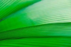 背景绿色叶子 库存图片