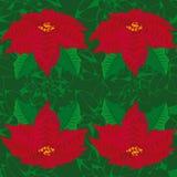 背景绿色无缝 一品红红色花  无缝的模式 免版税图库摄影