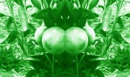 背景绿色果子操作 免版税库存照片