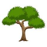 背景绿色查出的结构树白色 免版税库存图片
