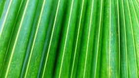 背景绿色椰子叶子 库存照片