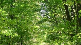 背景绿色横向现代本质向量 原野 森林林木背景 影视素材