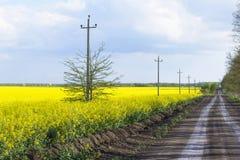 背景黄色油菜籽领域的风景视图 免版税库存照片