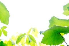 背景绿色留下白色 免版税库存照片