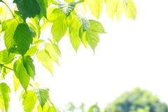 背景绿色留下白色 图库摄影