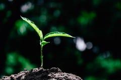 背景绿色自然叶子树 库存照片