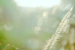 背景绿色自然叶子树 库存图片