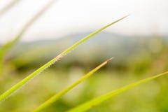 背景绿色自然叶子树 免版税图库摄影