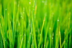 背景绿色自然 免版税图库摄影