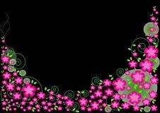 背景黑色花粉红色 库存照片