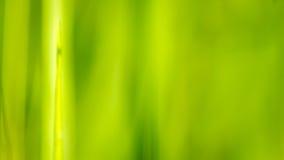 背景绿草,迷离线 库存图片