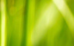 背景绿草,迷离 库存照片
