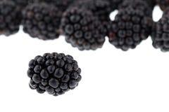 背景黑莓梯度没有使用的白色 免版税库存图片