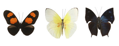 背景蝴蝶五颜六色的超出白色 免版税图库摄影