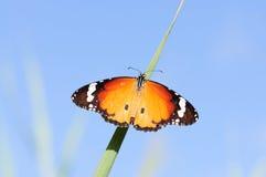 背景蝴蝶无缝的天空 库存照片