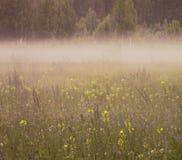 背景细部图花卉向量 很多蓝色和黄色花在夏天开花在早晨薄雾的一块沼地 免版税库存图片