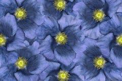 背景细部图花卉向量 蓝色花 免版税库存照片