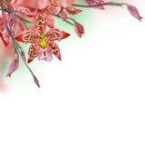 背景细部图花卉向量 免版税库存图片