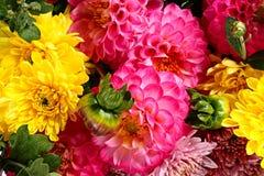 背景细部图花卉向量 免版税图库摄影