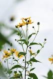 背景细部图花卉向量 图库摄影