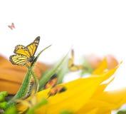 背景细部图花卉向量 库存图片