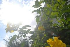 背景029-Beautifully生长高树,并且太阳通过与黄色花的顶面高树股票图象看 免版税库存图片