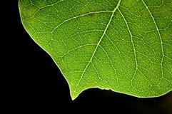 背景blck重点叶子模式 免版税库存照片